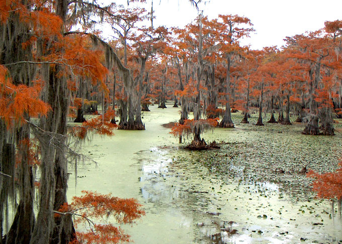 Forests under water